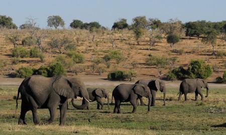 botswana-1653014_960_720