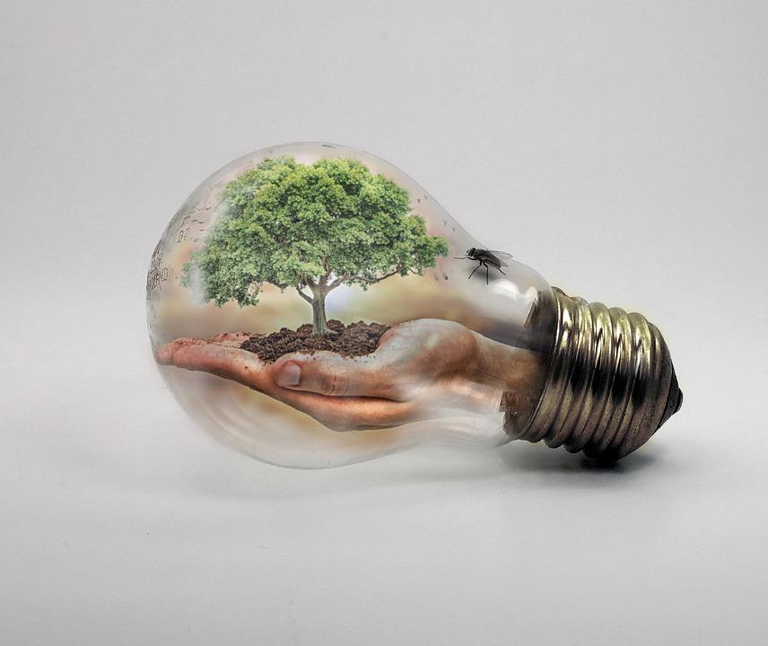bulb-2368396_960_720